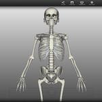 【やってみた】無料3D人体模型「Biodigital Human」が便利過ぎてヤバい