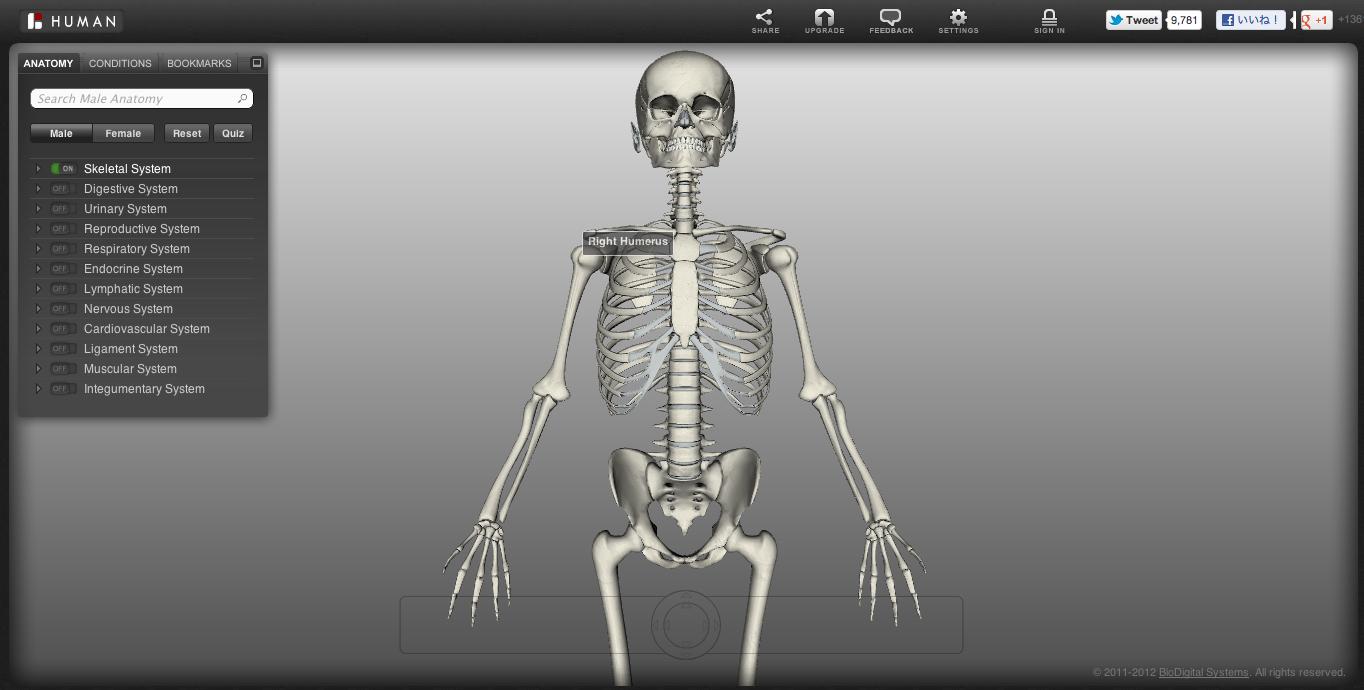 【やってみた】無料3D人体模型「Biodigital Human」が便利過ぎてヤバい1
