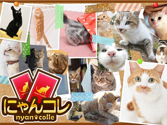 デジタライズ、GREEにて実写の猫がカードになって登場するソーシャルゲーム「にゃんコレ」をリリース 収益の一部を猫を保護するNPO団体に寄付1
