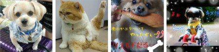 サイバーエージェント、ペット写真共有SNS「パシャっとmyペット」にてスギちゃんを審査員に迎えた「ワイルドペットコンテスト」を開催2