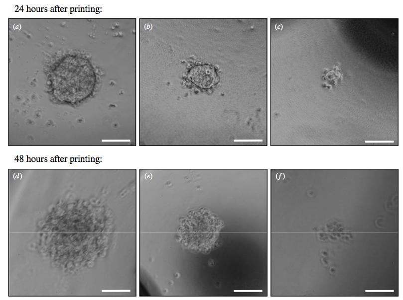 """イギリスとスコットランドの科学者、3Dプリンタでヒト幹細胞の""""出力""""に成功"""