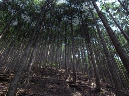 KONAMI、ソーシャルゲームドラゴンコレクション」と「ドラコレ&ポーカー」にて森林保全活動を支援するイベント「ドラコレ森を守ろうプロジェクト」を実施1