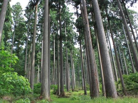 KONAMI、ソーシャルゲームドラゴンコレクション」と「ドラコレ&ポーカー」にて森林保全活動を支援するイベント「ドラコレ森を守ろうプロジェクト」を実施2