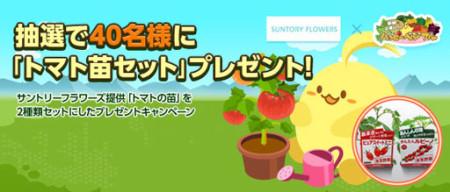 ソーシャル農園シミュレーションゲーム「ハッピーベジフル」、本物のトマト苗セットがもらえるキャンペーンを実施