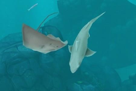 【やってみた】夏だ!海だ! 鮫になって人間を食べる動物なりきりゲーム「Hungry Shark Evolution」7