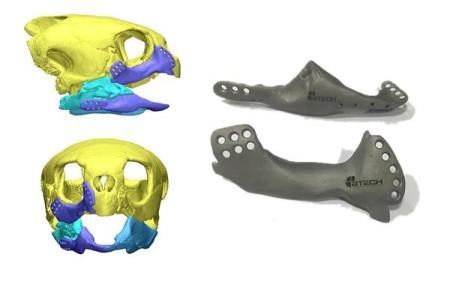 事故でアゴを損傷したウミガメ、3Dプリンタで作ったチタン製のアゴを取り付けられ復活