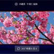 サントリー、360度動画で全国各地の桜の絶景を紹介する「金麦」の特設サイト「桜咲く 春の金麦」を公開