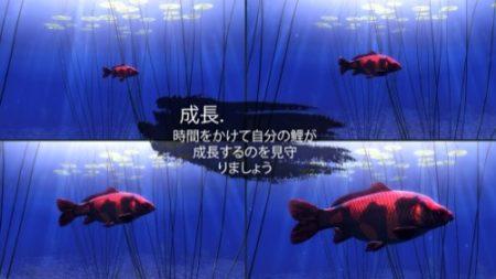 オーストラリアのSakana Studios、iOS向け鯉育成ゲーム「My Koi」をグローバルリリース 日本語にも対応