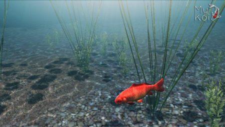 【やってみた】鯉を育てて眺める超美麗癒やし系アプリ「My Koi」