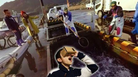 KTS鹿児島テレビ、高精細VRサービス「KTS VR」を提供開始