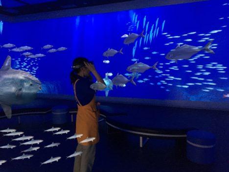 ハニカムラボ、愛媛県伊方町の道の駅「伊方きらら館」のバーチャル水族館「きららアクアリウム」のMRコンテンツを開発中