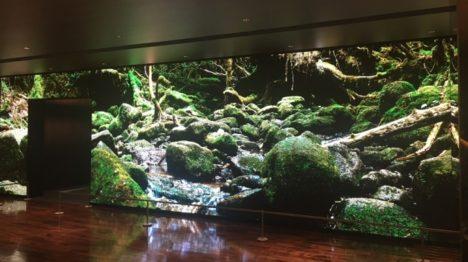 凸版印刷、壁一面に超高精細映像を表示する「感動体験型映像空間」を開発