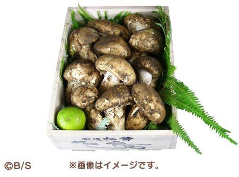 「なめこ栽培キット」との思い出を描いて松茸をGET!エピソード募集企画「なめことわたし」が実施中