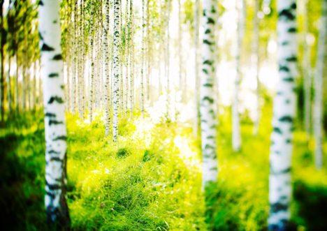 日本・フィンランド国交樹立100周年記念 2/18に先進地方都市オウルに学ぶイベント「フィンランド人クリエイター達の新たな挑戦」開催