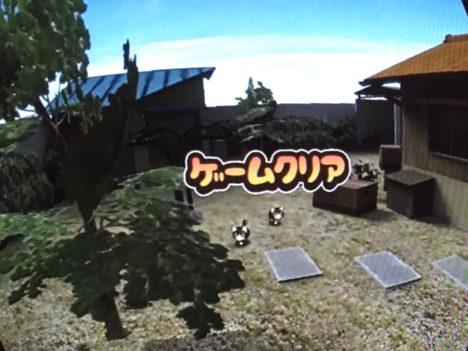 【TOKYO SANDBOX 2019レポート】ねこじゃらしを使って様々な猫を導こう! VR猫ゲーム「ネコミン」